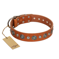 """Natural Beauty"" FDT Artisan Tan Leather Cane Corso Collar with Shining Silver-like Studs"