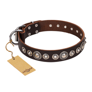 """Step and Sparkle"" FDT Artisan Glamorous Studded Brown Leather Cane Corso Collar"