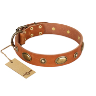 """Visual Magic"" FDT Artisan Tan Leather Cane Corso Collar for Daily Activities"