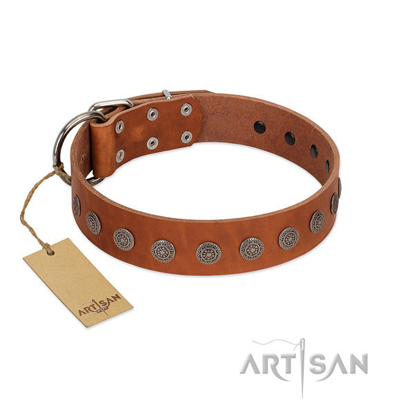 Extraordinary decorations on full grain leather collar for comfortable wearing your four-legged friend