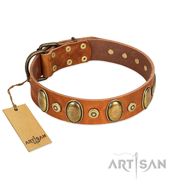 Rust resistant hardware on dog collar for stylish walking