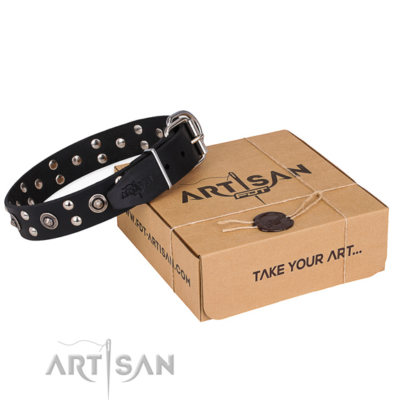 Everyday walking dog collar with Stunning rust resistant adornments