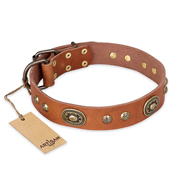 """Stunning Dress"" FDT Artisan Tan Leather Cane Corso Collar with Old Bronze Look Plates and Studs"