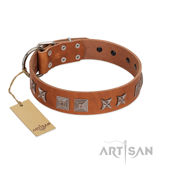 Natural leather dog collar with stylish adornments made four-legged friend