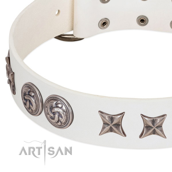 Leather collar with unique studs for your canine