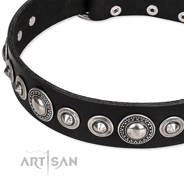 Walking studded dog collar of durable full grain genuine leather