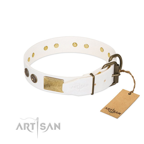Reliable fittings on leather collar for fancy walking your pet