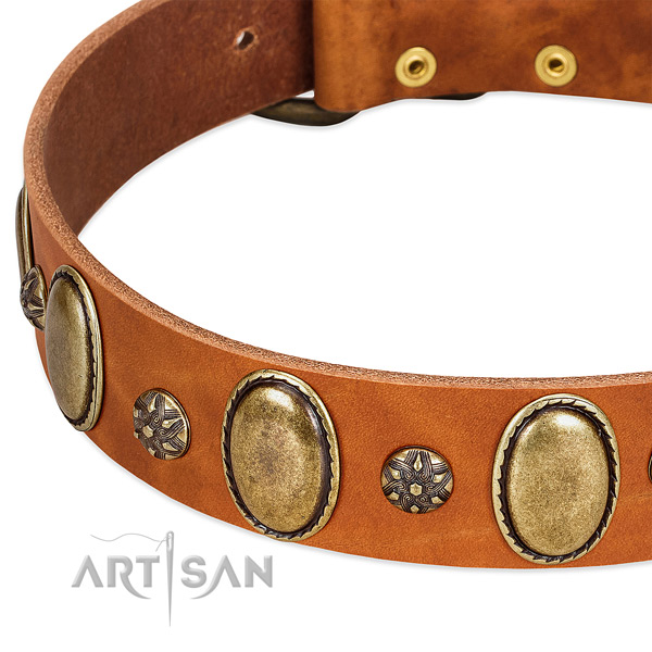 Everyday use top rate leather dog collar