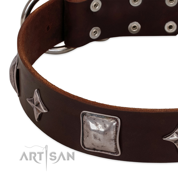 Fancy walking full grain genuine leather dog collar with extraordinary adornments
