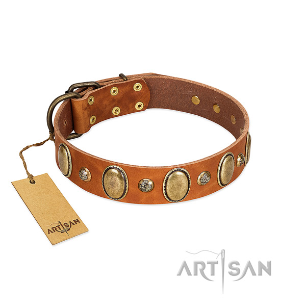 Genuine leather dog collar of reliable material with awesome adornments