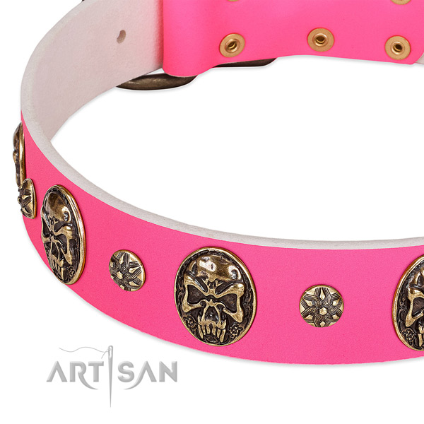 Studded dog collar crafted for your beautiful pet
