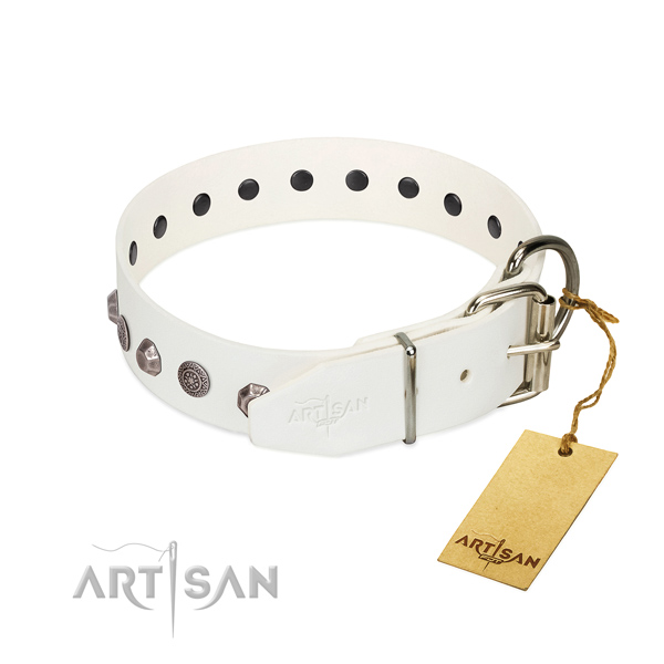 Rust-proof traditional buckle on genuine leather dog collar for everyday walking your four-legged friend