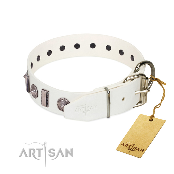 Walking full grain genuine leather dog collar with stylish embellishments