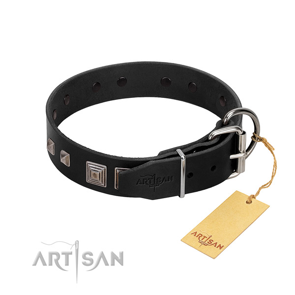 Fancy walking natural leather dog collar with impressive adornments