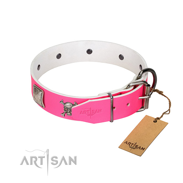 Walking full grain leather dog collar with unusual studs