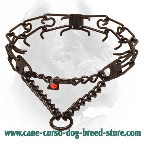 Black stainless steel prong collar for poorly behaved pets