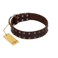 """Star Party"" Handmade FDT Artisan Brown Leather Cane Corso Collar with Silver-Like Studs"