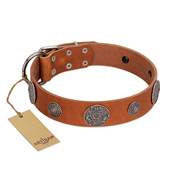 """Foxy Nature"" FDT Artisan Tan Leather Cane Corso Collar with Chrome Plated Brooches"