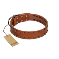 """Star Light"" Stylish FDT Artisan Tan Leather Cane Corso Collar with Silver-Like Studs"