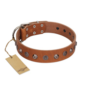"""Silver Age"" Fashionable FDT Artisan Tan Leather Cane Corso Collar with Silver-Like Studs"