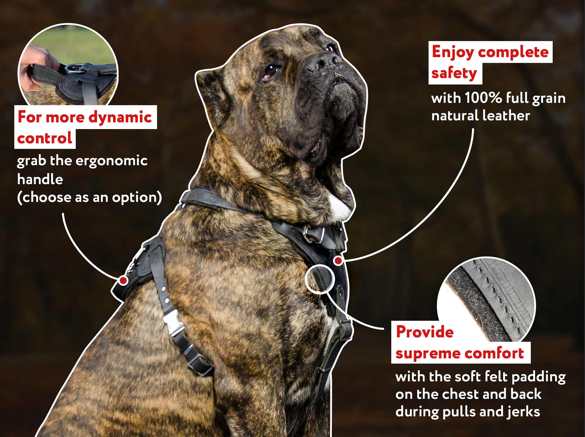 Agitation/ Protection Leather Dog Harness - Cane Corso Heavy Duty Breast-Band