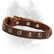 Brass Studs Decorated Leather Dog Collar for Cane Corso