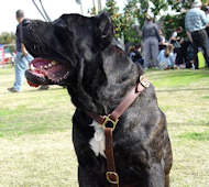 Luxury Handcrafted Leather Dog Harness-Cane Corso Multipurpose Harness