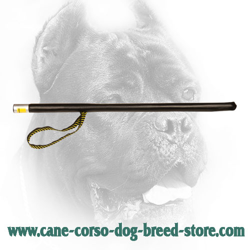 Flexible Cane Corso Stick for Training