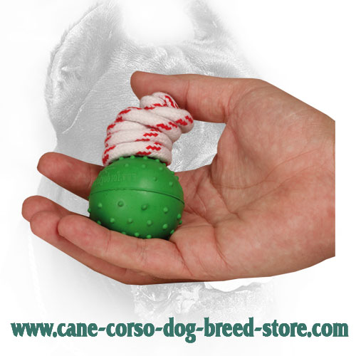 Safe in Use Rubber Cane Corso Ball for Dog Training