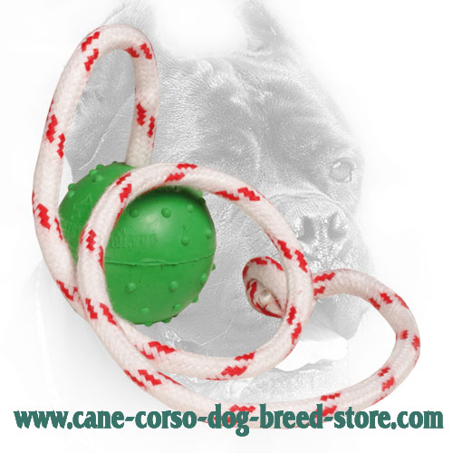 Training Cane Corso Ball with Nylon Rope