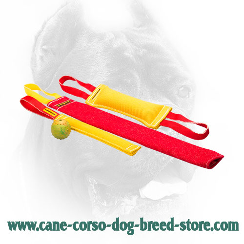 Safe in Use Cane Corso Bite Training Set of 4 Dog Supplies