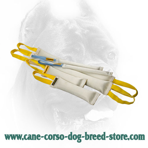 Fire Hose Cane Corso Bite Training Set for Retrieve Item Training