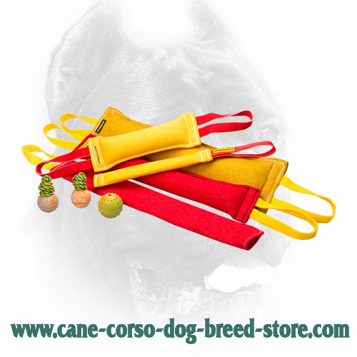 French Linen Cane Corso Bite Training Set for Effective Training
