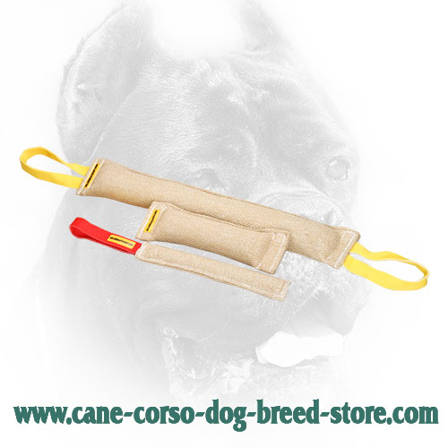 Eco-Friendly Cane Corso Bite Training Set for Basic Training
