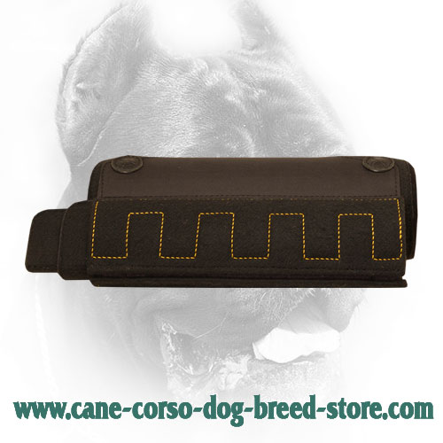 Cane Corso Bite Builder for Dog Training