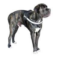 >Get Now Cane Corso Dog Harnesses