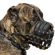 Buy Now dog muzzles Cane Corso breed