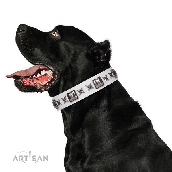 Inimitable embellished natural leather dog collar for stylish walking
