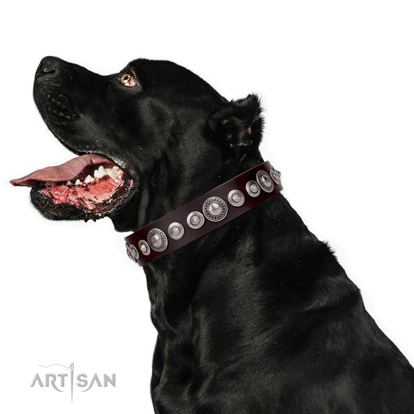 Significant decorated genuine leather dog collar for comfortable wearing
