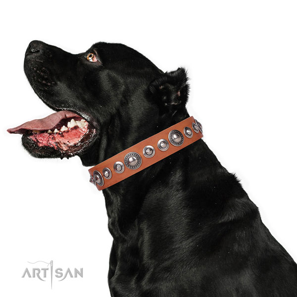 Top notch adorned genuine leather dog collar for stylish walking