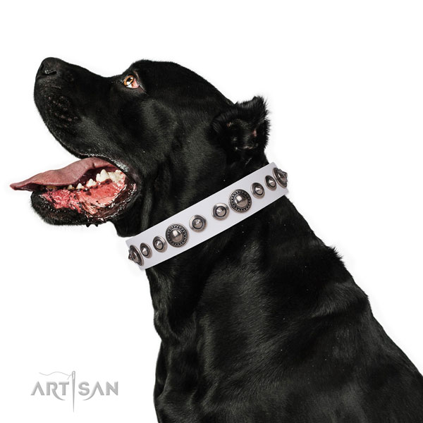 Impressive decorated leather dog collar for easy wearing