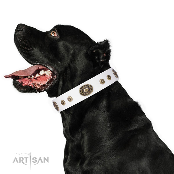 Top notch studded leather dog collar for easy wearing