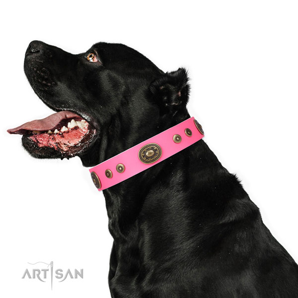 Fashionable decorated genuine leather dog collar for everyday use