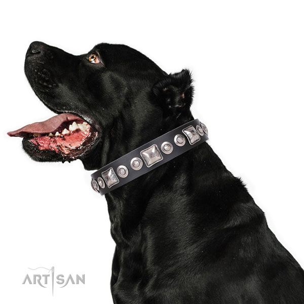 Designer adorned genuine leather dog collar for everyday walking