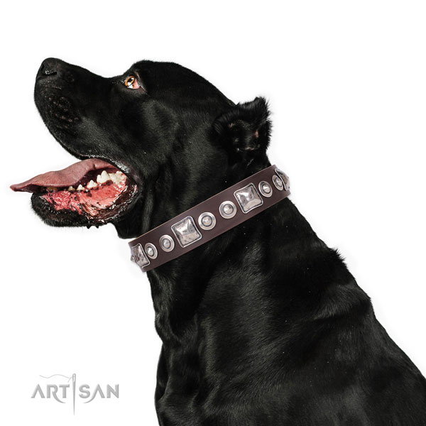 Unusual embellished natural leather dog collar for everyday use