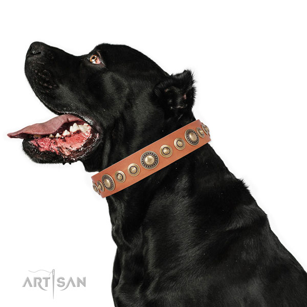 Corrosion proof buckle and D-ring on leather dog collar for everyday use