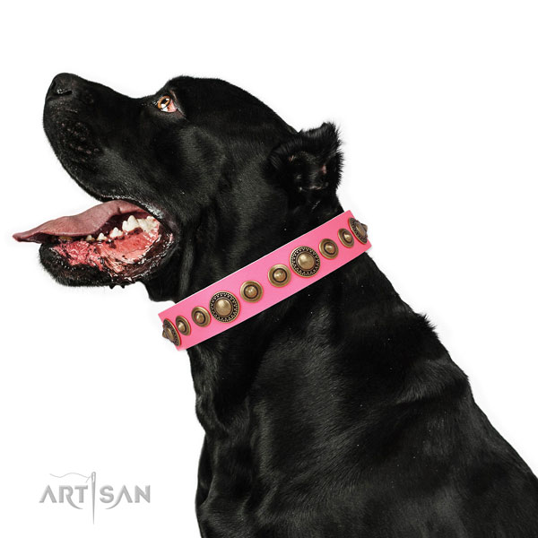 Reliable buckle and D-ring on genuine leather dog collar for everyday walking