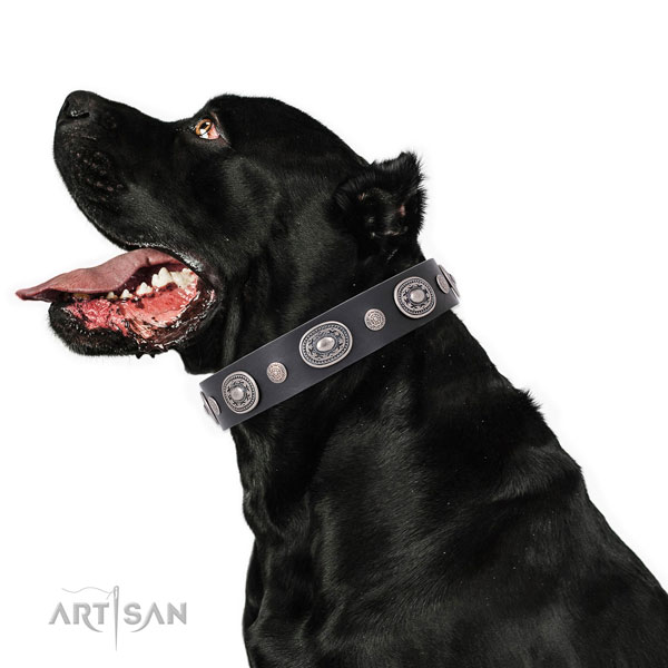 Corrosion resistant buckle and D-ring on leather dog collar for daily walking