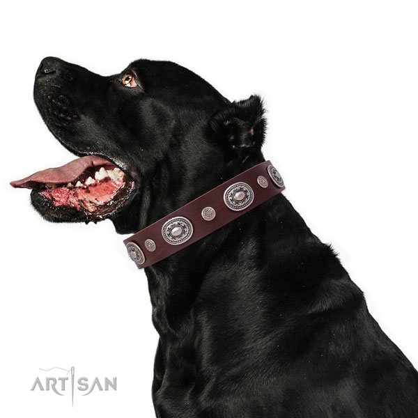 Reliable buckle and D-ring on genuine leather dog collar for stylish walking