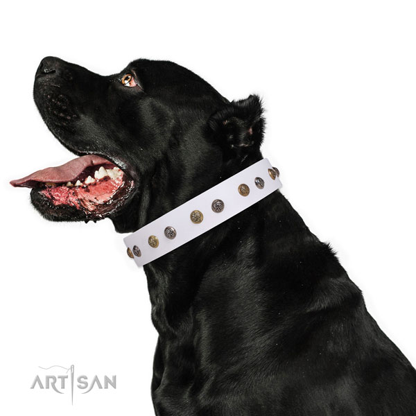 Everyday walking adorned dog collar made of high quality genuine leather